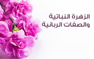 الزهرة النباتية والصفات الربانية!!